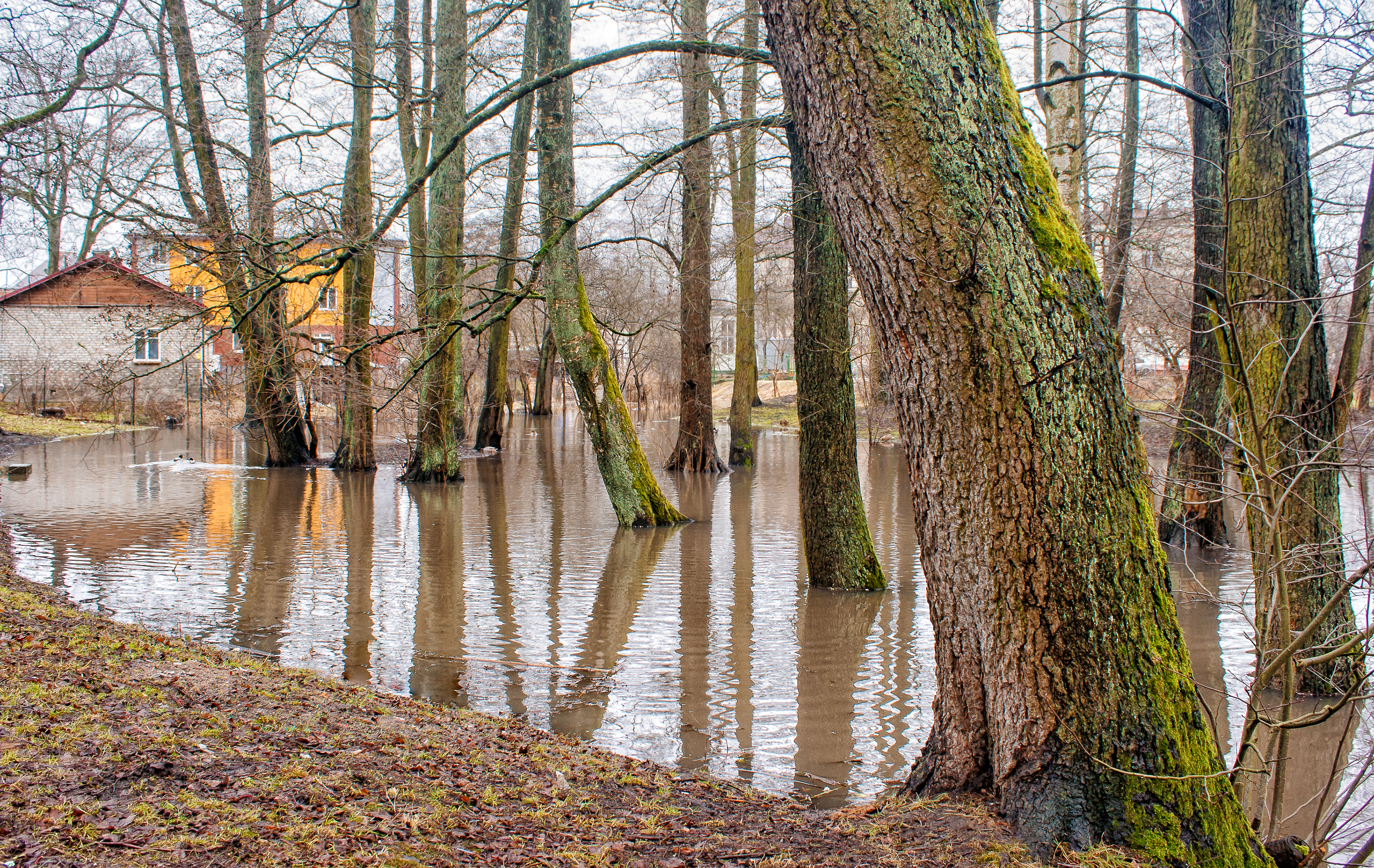 image of a flooded wooded area